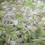 Pesto alla genovese- Ricetta Bimby